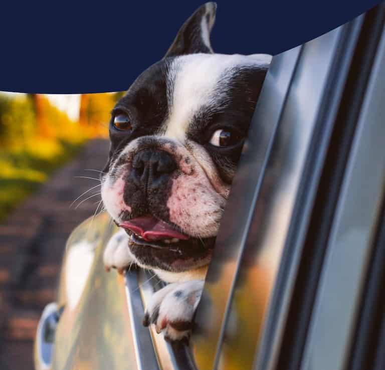 A dog is protected by Kane Insurance in a car.